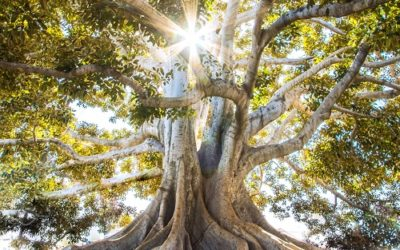 Ancestral Clearing – To Find Our Radiant Self on this Equinox New Moon